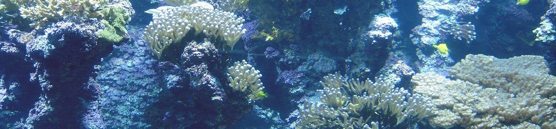 camping aquarium de la rochelle