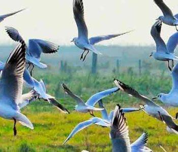 reserve naturelle lilleau des niges ile de ré